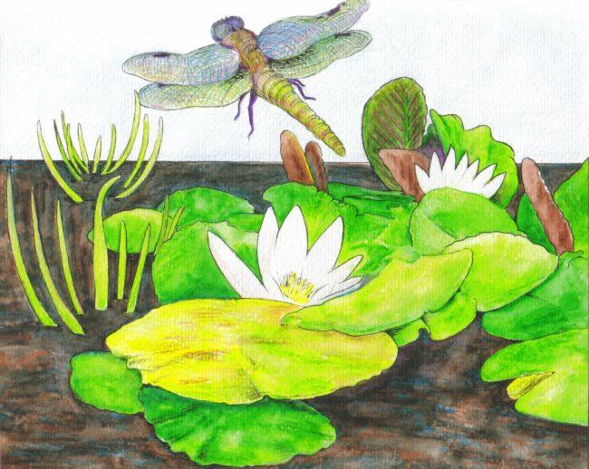Libellen am Teich